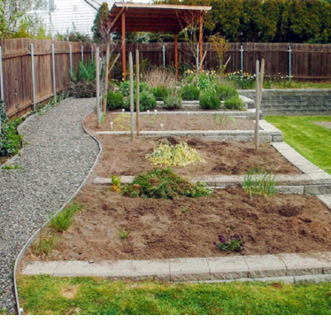 A gravel path next to beds of a vegetable garden