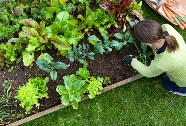 A woman gardening in a vegetable garden